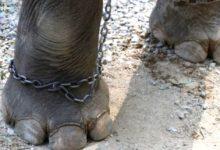 Tenere gli animali in catene è reato!!