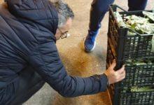 Andria – Blitz dell'assessore Matera con la Polizia Municipale al Mercato Ortofrutticolo