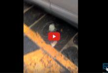 Molfetta – Pesce fresco lavato con acqua di fogna. VIDEO