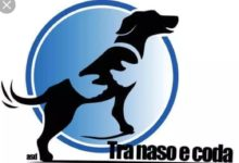 """Barletta – """"La paura dei cani nei bambini"""": Pet therapy all'Ambulatorio Popolare"""
