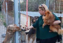 Trani – Nuova vita per il canile lager. Il cancello si apre alle telecamere di Batmagazine