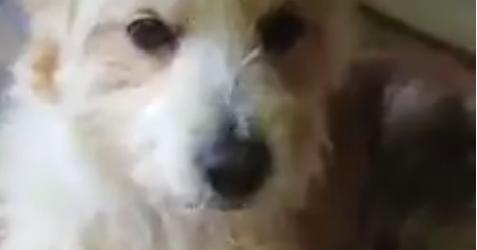 """Il cane trascinato sulla Trani-Barletta è vivo e sta bene: """"Non è stato fatto volontariamente"""". VIDEO"""