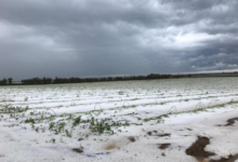 Emergenze agricole, le agevolazioni per i danni da maltempo del 2018