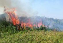 In fiamme la Riserva Naturale di Torre Guaceto