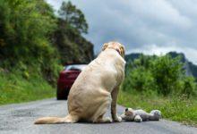 Trani – Campagna di sensibilizzazione contro l'abbandono dei cani