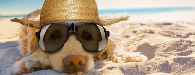A rischio il turismo Animal friendly in Puglia, la denuncia del CAAP
