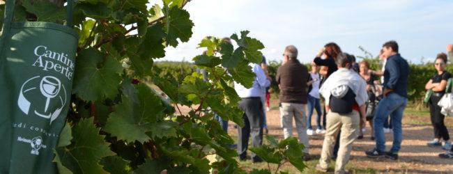 Cantine Aperte in Vendemmia: la festa del vino nelle cantine di Andria e di Minervino