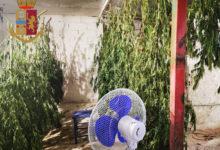Barletta – Serra di marijuana scoperta in un'abitazione: arrestato 43enne incensurato