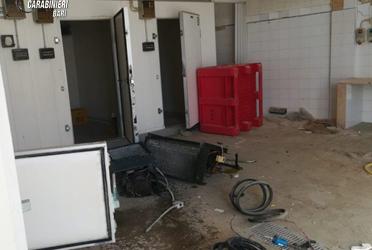 Trani – Furto di rame nell'ex deposito per il confezionamento di mitili in via Lungomare Cristoforo Colombo