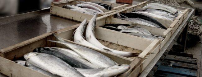 Trani – Contributi regionali per la vendita di prodotti ittici