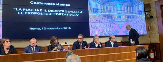 """Xylella, FI: """"E' questione nazionale, stanziare 1mld in legge Bilancio"""""""