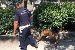 Andria – Regolamento di Sicurezza Urbana: sanzioni da 50 a 500 euro per assenza di pulizia di giardini e aree verdi