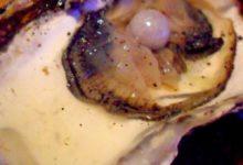 """Puglia – Acquista delle ostriche e all'interno vi trova una perla vera: """"La regalerò a mia moglie"""""""