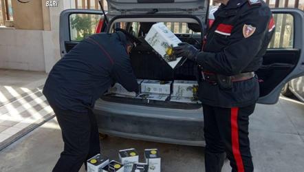 Trani – Carabinieri, furti in abitazione: due arresti