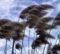Vento forte sulla BAT: protezione civile dirama l'allerta gialla