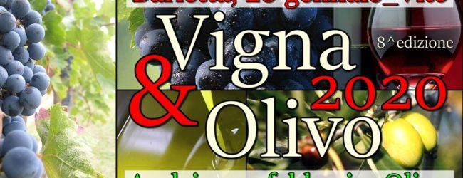 """Andria – Ultimo appuntamento di """"Vigna & Olivo 2020"""": l'Olivicoltura tra innovazione e sostenibilità"""