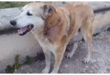 Cane sgozzato ad Andria, Lega Nazionale del Cane scrive alla Polizia Municipale