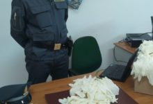 Sequestrati 80mila guanti in lattice monouso destinati in Montenegro