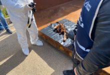 Trani – Cos'erano quegli animali stesi sul balcone? Arriva l'ufficialità