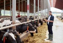 Tavolo Latte Puglia: la Giunta Regionale stanzia 1 milione di euro in favore degli allevatori