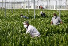 DL Maggio, Coldiretti favorevole alla proporga dei permessi di soggiorno, ora i voucher agricoli