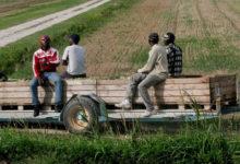 """Puglia – """"80 giornate l'anno sono troppo poche. I braccianti chiedono più lavoro"""": l'intervento del sindacato Uila"""
