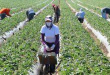 Puglia – 500€ per il mese di aprile ai braccianti agricoli. Accolto l'appello della Uila