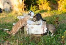 Molfetta – Gattini falciati tra l'erba alta nel giardino della sede municipale di Lama Scotella