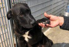 Barletta – Riapre il rifugio comunale per cani di via Andria: Bar.S.A. regolamenterà gli accessi
