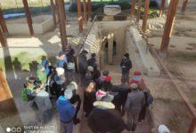 Ripartono le visite guidate presso i siti archeologici di Canosa di Puglia