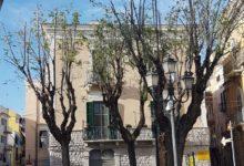 Legambiente Barletta, denuncia l'inappropriata potatura di alberi in città