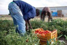 Uila Puglia, solo 166 domande di regolarizzazione in agricoltura presentate nella nostra regione